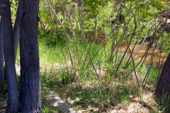 Malutcy drzewa wodą Obraz Royalty Free
