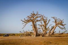 Malutcy ludzie ogromnego drzewa Obrazy Stock