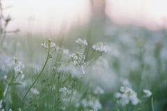 Malutcy wiosna kwiaty Obraz Stock