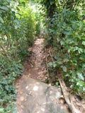 Malutka Chodząca ścieżka w znęconym zdjęcia stock