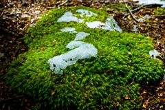 Malutka roślina z śniegiem Zdjęcie Stock