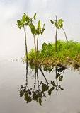 Malutka wyspa rośliny Zdjęcia Stock