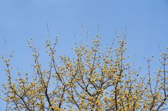 Malutki żółty kwiat z niebieskiego nieba tłem Zdjęcie Royalty Free