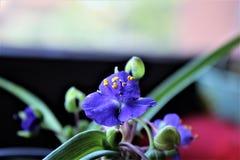 Malutki błękitny kwiat Zdjęcie Stock