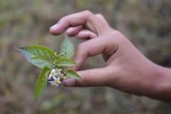 Malutki Dziki kwiat Fotografia Stock