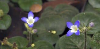 Malutki i zadziwiający kwiat nagrywający w zostawać tropikalny las deszczowy Obraz Royalty Free