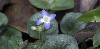 Malutki i zadziwiający kwiat nagrywający w zostawać tropikalny las deszczowy Obrazy Stock