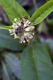 Malutki i zadziwiający kwiat nagrywający w zostawać tropikalny las deszczowy Zdjęcie Stock