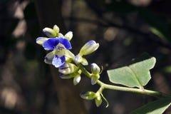Malutki i zadziwiający kwiat nagrywający w zostawać tropikalny las deszczowy Fotografia Stock
