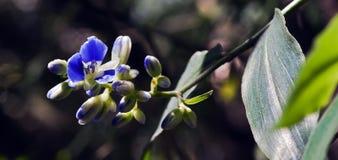 Malutki i zadziwiający kwiat nagrywający w zostawać tropikalny las deszczowy Zdjęcia Stock