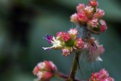 Malutki i zadziwiający kwiat nagrywający w zostawać tropikalny las deszczowy Obrazy Royalty Free