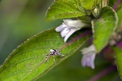Malutki i zadziwiający kwiat nagrywający w zostawać tropikalny las deszczowy Obraz Stock