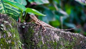 Malutki jaszczurki polowanie w ogródzie dla niektóre insektów fotografia stock