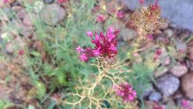 Malutki Kwiat Zdjęcia Stock