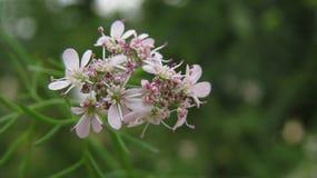 Malutki Kwiat Obrazy Stock