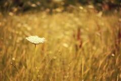 Malutki lato kwiat Fotografia Royalty Free