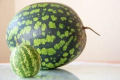 Malutki niedojrzały arbuz i duży arbuz na plecy Przyrost, karmowy pojęcie Zdjęcie Stock