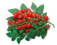 Malutki pomidoru Solanum pimpinellifolium, ścieżki, odgórny widok Fotografia Royalty Free