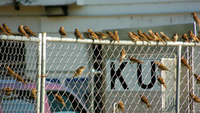 Malutki Ptasi spotkanie Zdjęcie Stock