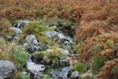 Malutki strumień otaczający zadziwiającymi kolorowymi roślinami Obrazy Royalty Free