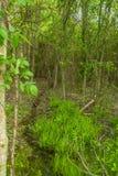 Malutki strumień w zwartym drewnie Obraz Stock