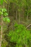 Malutki strumień w zwartym lesie Fotografia Royalty Free