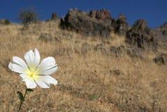 Malva в горах Стоковая Фотография RF