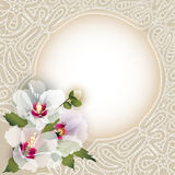 Malva on background with lace Royalty Free Stock Photo