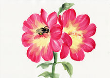 Malva and bumblebee Stock Images