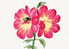 Malva and bumblebee. Two big malva flowers with bumblebee. Original watercolor painting Stock Images