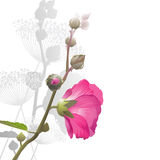 Malva. Flower arrangement Royalty Free Stock Image