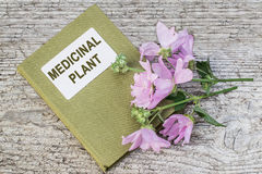 Malva moschata and directory medicinal plant Stock Photo