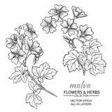 Malva vector set. Malva plant vector set on white background Stock Images
