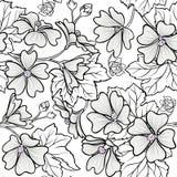 Malva seamless pattern. Malva plant seamless pattern on white background Stock Images