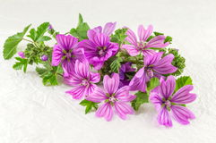 Malva sylvestris, mallow, flowers bouquet on white. Fabric Royalty Free Stock Photos