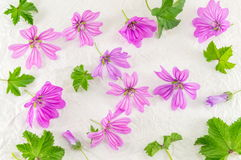 Malva sylvestris, mallow, flowers bouquet on white. Fabric Stock Image