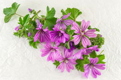 Malva sylvestris, mallow, flowers bouquet on white. Fabric Stock Photos