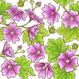 Malva vector frame. Malva plant vector frame on white background Stock Images