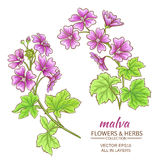 Malva vector set. Malva flowers vector set on white background Royalty Free Stock Image
