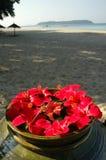 Malvaceae-Hibiscus-Blumen auf einem Strand Stockfotos