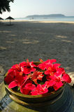 Malvaceae Hibiscus Flowers On A Beach. Red full bloom Malvaceae Hibiscus Flowers decoration on a beach Stock Photos