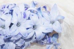 Malvafärgad blomma, hyacint Arkivbilder