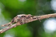 Malvagità dell'insetto Fotografie Stock Libere da Diritti