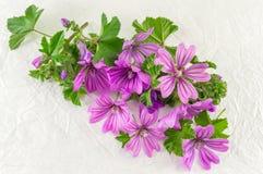 Malvasylvestris, malva, blommar buketten på vit Arkivfoton