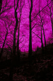 Malvenfarbene Bäume Lizenzfreies Stockfoto