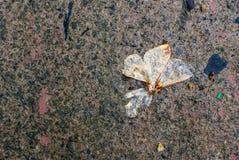 Malvingar återstår slutet av liv arkivbilder