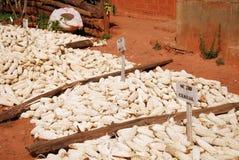 Malze in Tanzania royalty-vrije stock fotografie