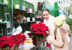 Mamá con la flor de compra del niño Imagen de archivo libre de regalías