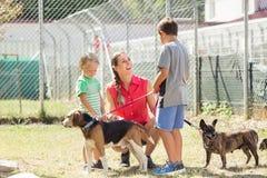 Mamá con sus perros que caminan de los hijos de un refugio para animales fotografía de archivo