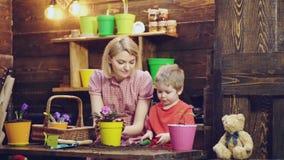 Mamá y planta y cuidado del hijo para las flores Flores de la planta de la mujer y del muchacho en potes coloridos en un fondo de metrajes
